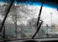 Windshield Wiper Blades